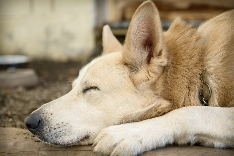 Photo of Buddy at the Delta Community Animal Shelter