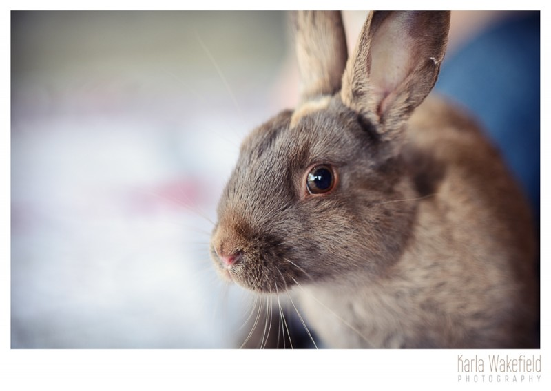 photograph 3 of a pet rabbit at the Delta Community Animal Shelter named Wiggles