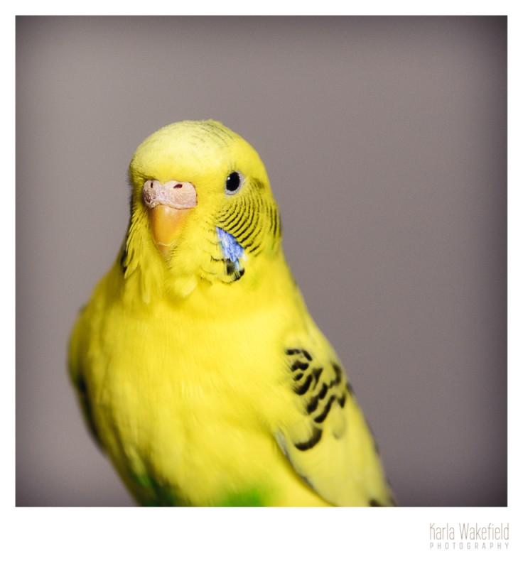 Apr-2013-Dazil-Birds-page-3