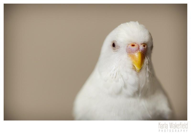 Apr-2013-Dazil-Birds-page-4