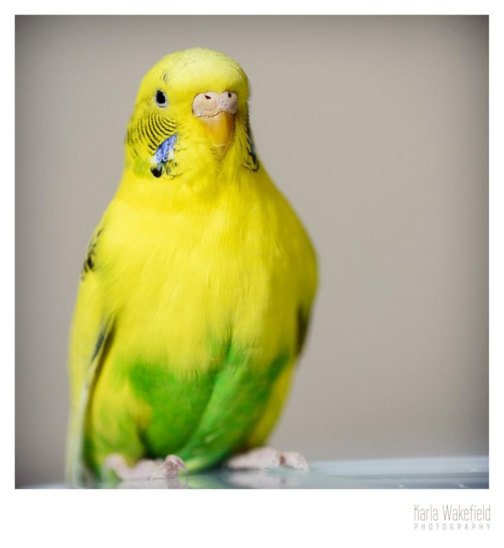 Apr-2013-Dazil-Birds-page-5
