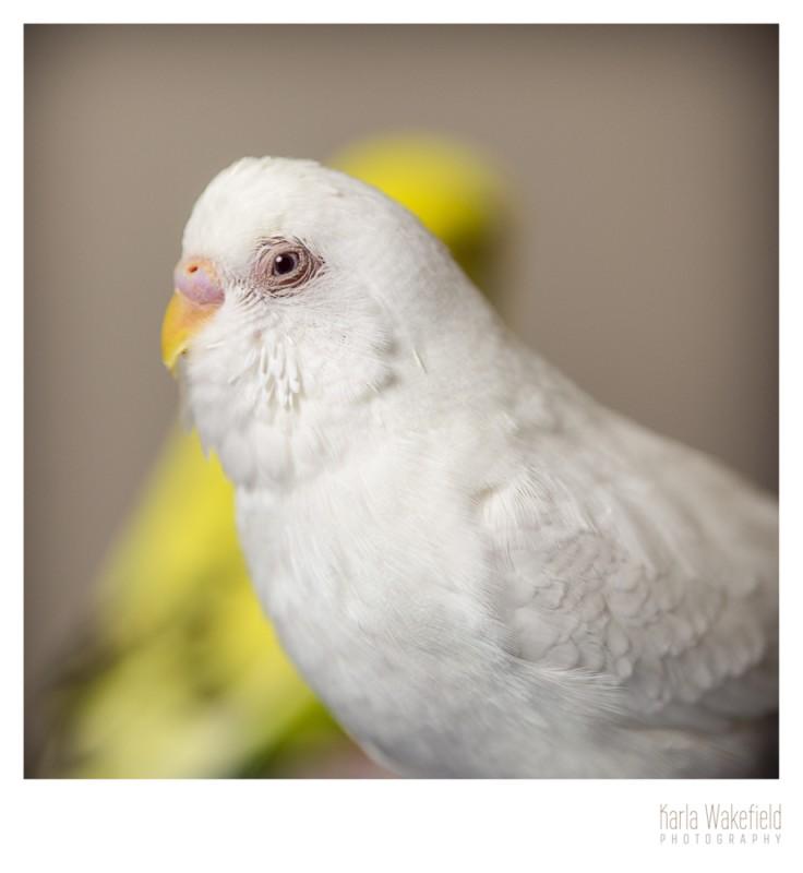 Apr-2013-Dazil-Birds-page-6
