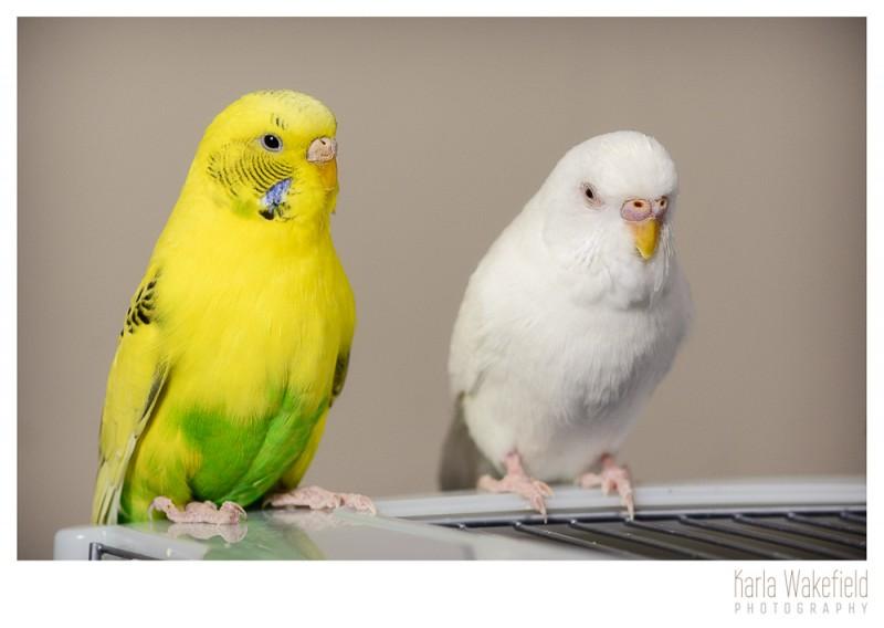 Apr-2013-Dazil-Birds-page-7