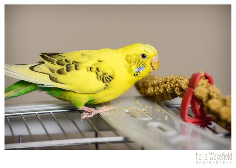 Apr-2013-Dazil-Birds-page-9
