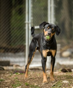 Photograph of a black and tan dog at the shelter playground