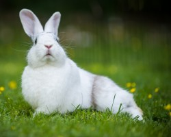 Photography of a white bunny rabbit in a funny pose