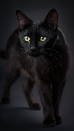 A black cat named Snow While walking towards the camera